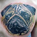 Realistic Pug Portrait - Tattooed by Ryan Thomas at Granite State Tattoo