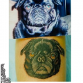 Black Pug, Tattooed by Anne Morando at Adorn Body Art in Portland OR USA