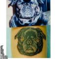 Black Pug, Tattooed by Anne Morando at Adorn Body Art in Portland OR USA