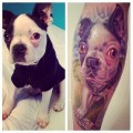 Boston Terrier Tattoo - Submitted by @reptarpwns