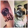 Harley the Pug - Tattooed by Chad Lambert at Kellar Studios in Chesterfield, USA