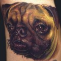 Realistic Pug Portrait, Tattooed by Nate Beavers from Houston TX USA - Web: NateBeavers.com - Insragram: @NateBeavers