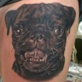 Very Realistic Pug Portrait - Tattooed by Andy Bautista at Sacred Gallery
