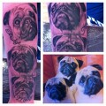 Three Little Pugs (in Progress) - Tattooed by Edel Walsh at Eden Art Tattoo