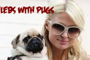 Celebrities with Pugs (with Pics & Videos)