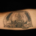 Sleeping Pug - Tattooed by Hayley a Fu's Custom Tattoo