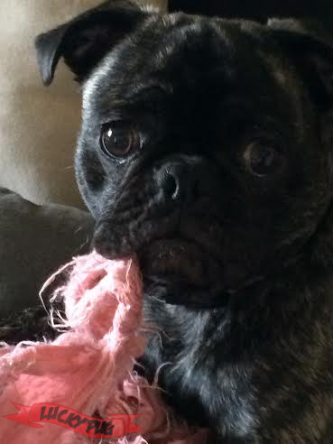 Boss the Frug 02