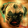 Nusi the Pug - Tattooed by Somogyi Sándor of Green Skull Tattoo