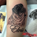 Memorial Pug Tattoo - RIP Elvis - Tattooed by Cuong Tcheou of Vanh's Tattoo Studio