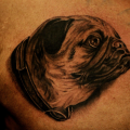 Pug Portrait - Tattooed at Chronic Ink Tattoo, Toronto
