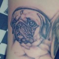 Pug portrait - Tattooed by Theofabri of Badskin Tattoos