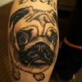 Dooku the Pug - Tattooed by Rob Ratcliffe of Border Rose Tattoo