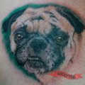 Chest Pug Tattoo by Gee from the ink spot, Phoenix, Arizona, USA
