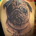 Pug Portrait Tattoo by Tricia Atkinson at Ugly Bishops Tattoo Shop