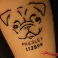 Memorial Pug Tattoo for Olivia's Pug, Presley - Tattooed by Scott Quinney at Stingray Bodyart
