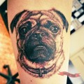 Arm Pug Tattoo on Kat Young