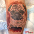RIP Enzo the Pug - on Aj Vagliani