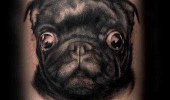 leg-pug-tattoo-on-jennievdveen-by-marcel-tambach-of-se7en-sins-tattoo