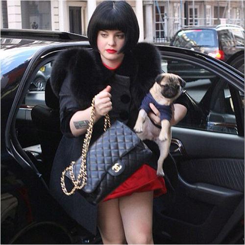 kelly-osbourne-pug-Prudence