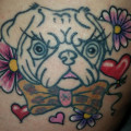 Frankie the Pug - on Stephanie Jacklin