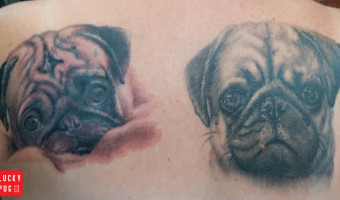 back-pug-tattoo-on-mitsy-by-kev-wakefield-uk