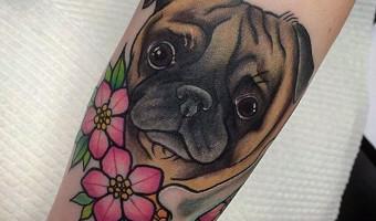 arm-pug-tattoo-on-keeley-stoneman-by-sami-locke