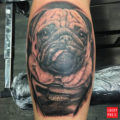 Frank the Pug - by Kev at Draconian Tattoo Aberdeen