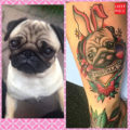 RIP Priscilla the Pug - Memorial Tattoo by Rich Warburton of DPE Tattoo Lounge