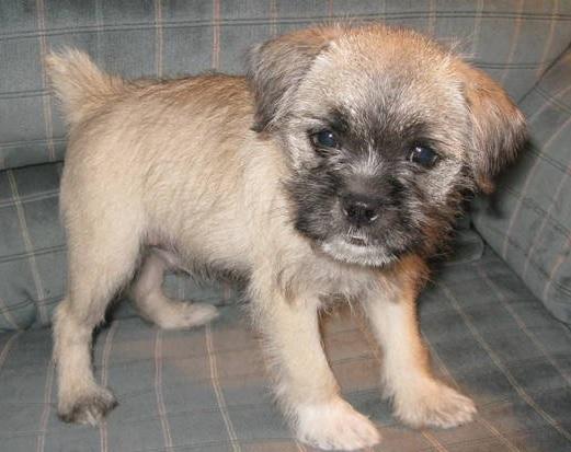 Pug Cross Breeds | Cutest Pug Mix Dogs - Complete List