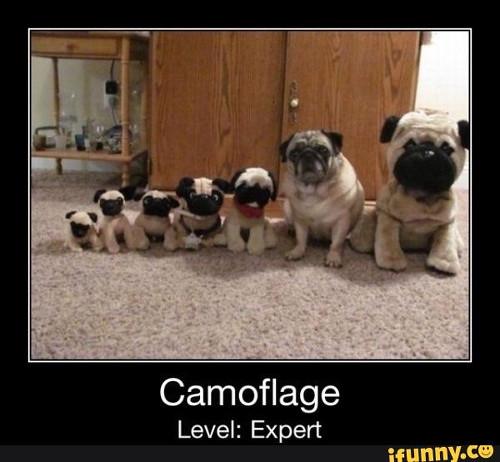 pug-meme-camoflage