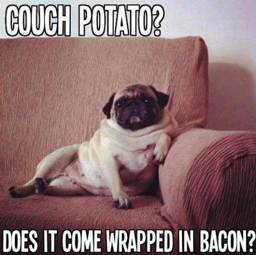 pug-meme-couch-potato-bacon
