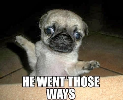 pug-meme-he-went-those-ways
