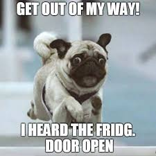 pug-meme-heard-the-fridge-door-open