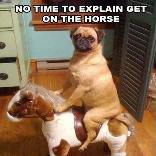 pug-meme-no-time-to-explain-get-on-the-horse