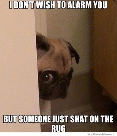 pug-meme-peeking-pug