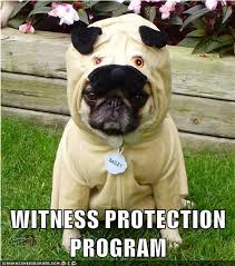 pug-meme-witness-protection-program
