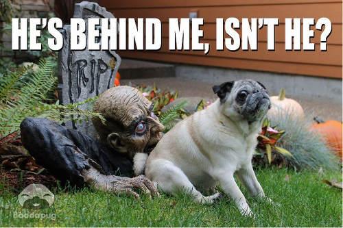 pug-meme-zombie-behind