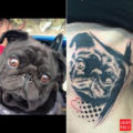 Kikou the Pug - by Effysuicide, Switzerland