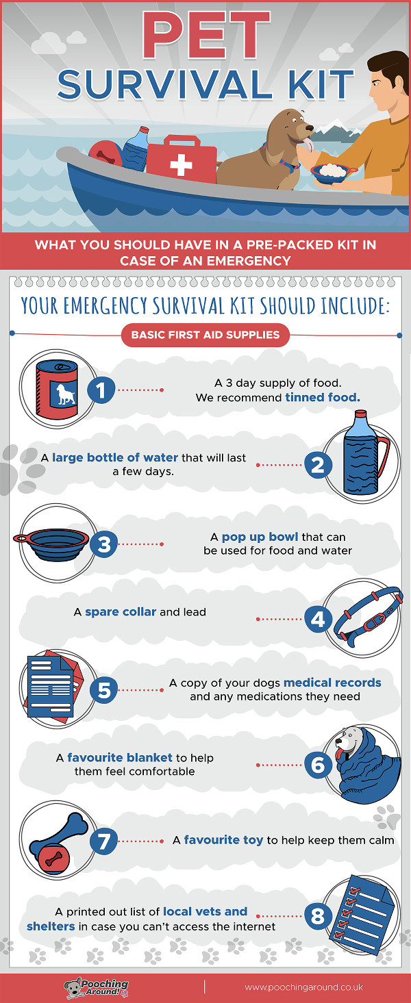 Dog survival kit inforgraphic
