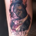 Oakley the Boston Terrier, Submitted by Gaz Guy Oakley from Christchurch, New Zealand