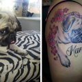 Louise Nicklin's Pug, Marlee - Tattooed by Toni Gwilliam