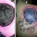 Don't Call me Mavey - Submitted by Louise Nicklin - You can check out Louise's other pug tattoo of Marlee in the Arm Tattoo Section!