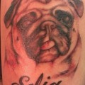 Sofia the Pug by Matthew Longo at Liquid Design Tattoo in West Warwick Rhode Island USA