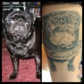 Chester Beans the Pug - Submitted by Jessica Quinn, NY, USA
