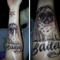 In Memory of Bailey the Pug -  Submitted by Julie Andersen