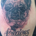 In Memory of Precious the Pug - Tattooed by Jackie Inkbitch Jennings at Tru Blu Tatu
