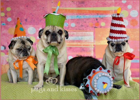 Four Pawesome Pug Blogs you should check out