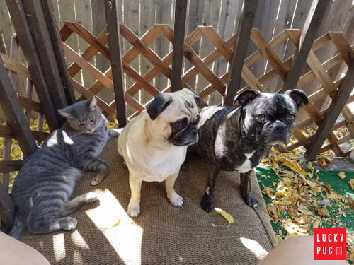 cat, pug and bugg sat together