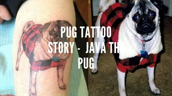 Pug Tattoo Story – Memorial Tattoo of Java the Pug