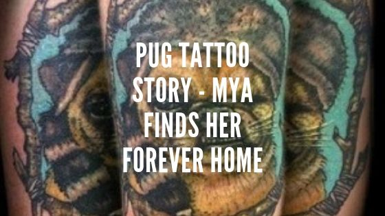 Pug Tattoo Story – Mya Finds Her Forever Home